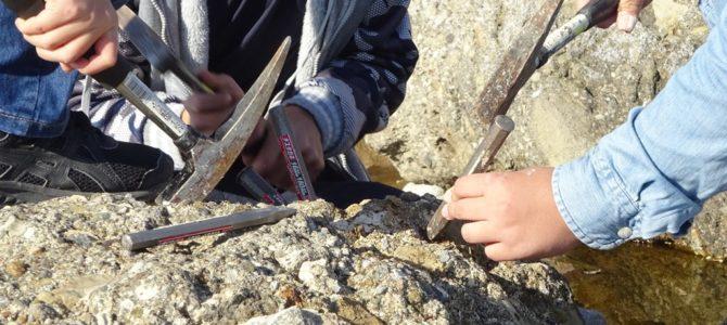 大磯で化石採集