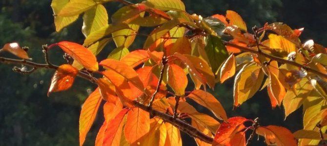 紅葉・黄葉